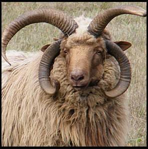 Navajo Sheep Association