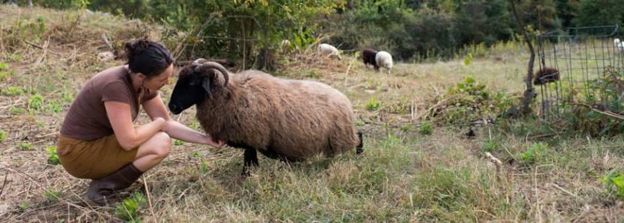 rachel with Sheep